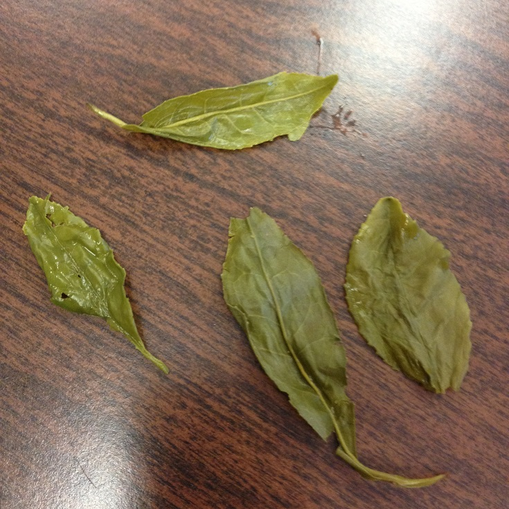 High Grade Gunpowder Green Tea Infused Large Leaves