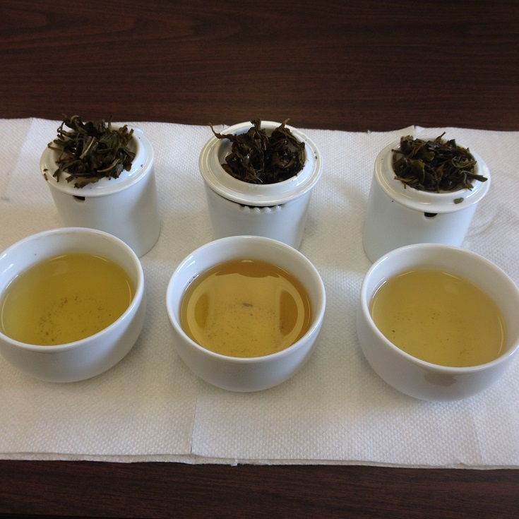 Chinese Green Tea Comparison Infused Leaves