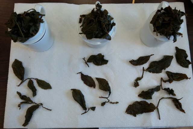 Jin Xuan Wulong Tea Comparison - Infused Leaves