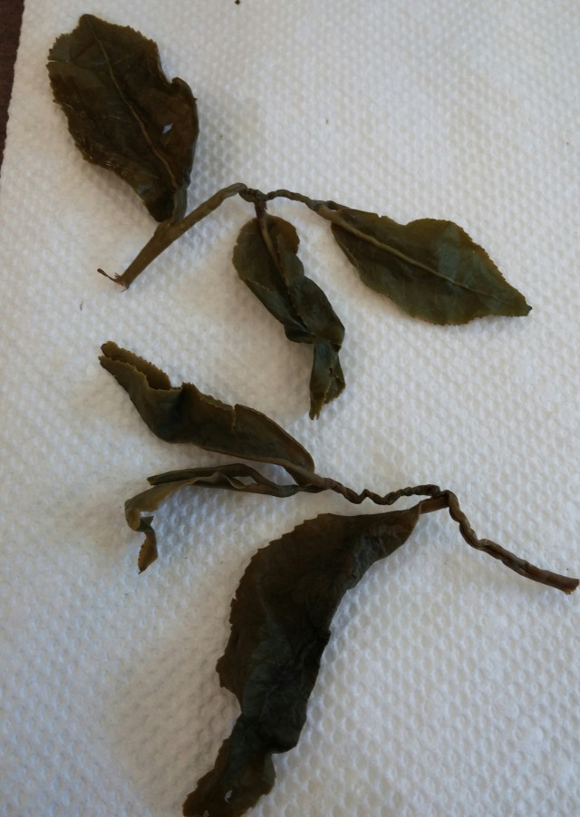 Alishan Taiwan Jin Xuan Wulong - Infused Leaves