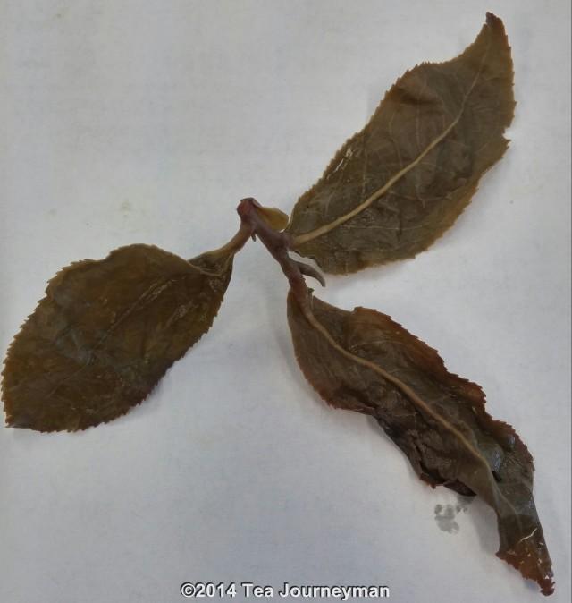 Four Seasons of Spring Oolong Tea Infused Leaves Closeup